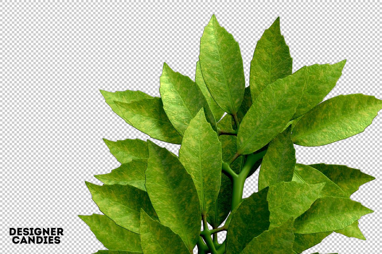 Foliage Renders