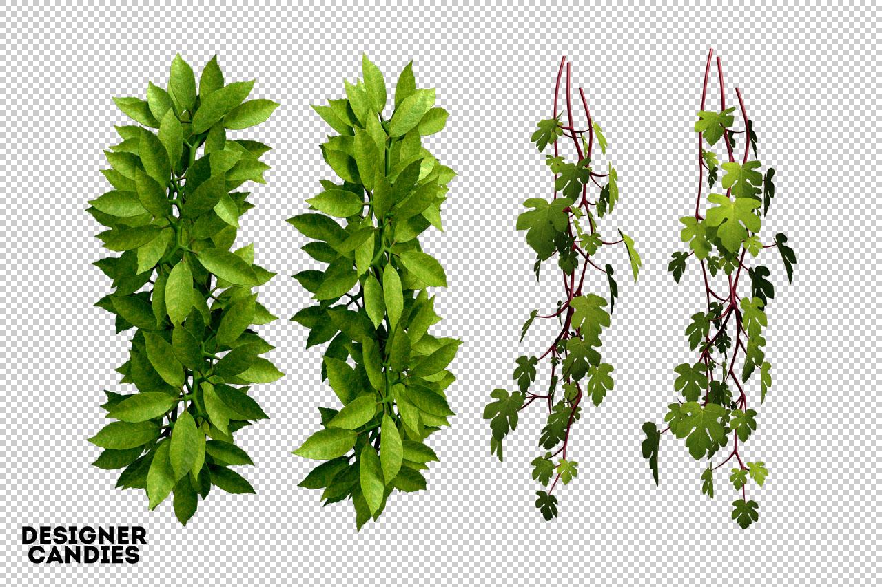 Leaf Renders