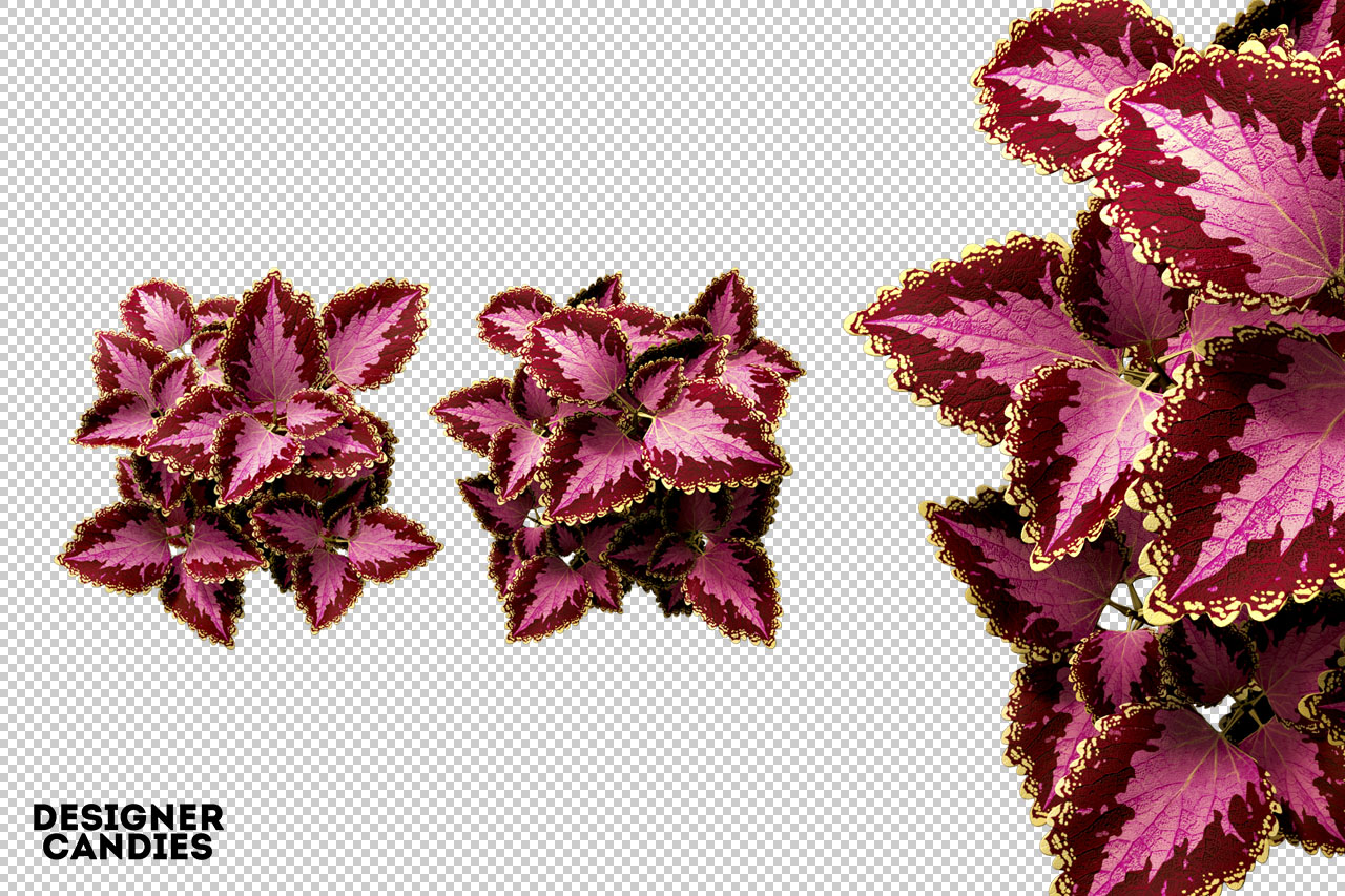 Free PNG Flower Renders