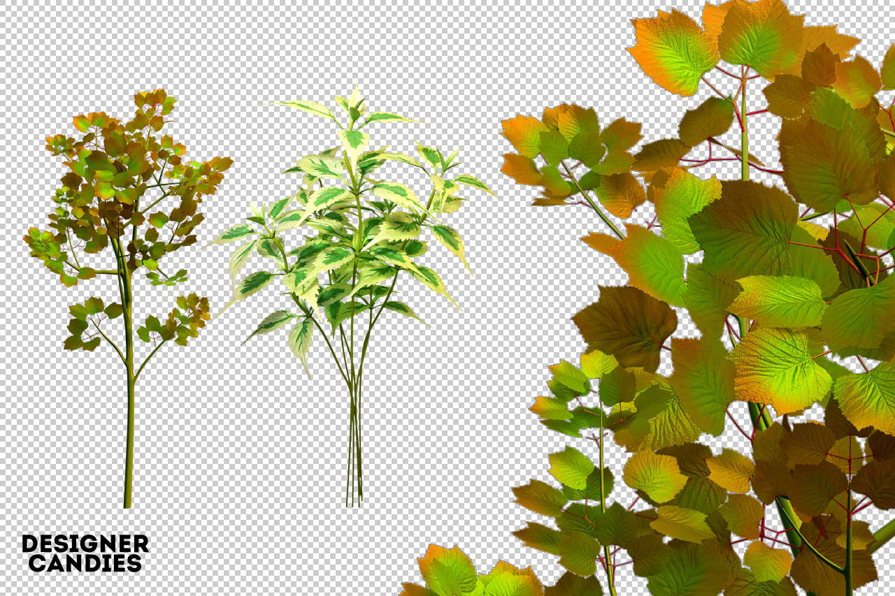 Tree PNG Renders