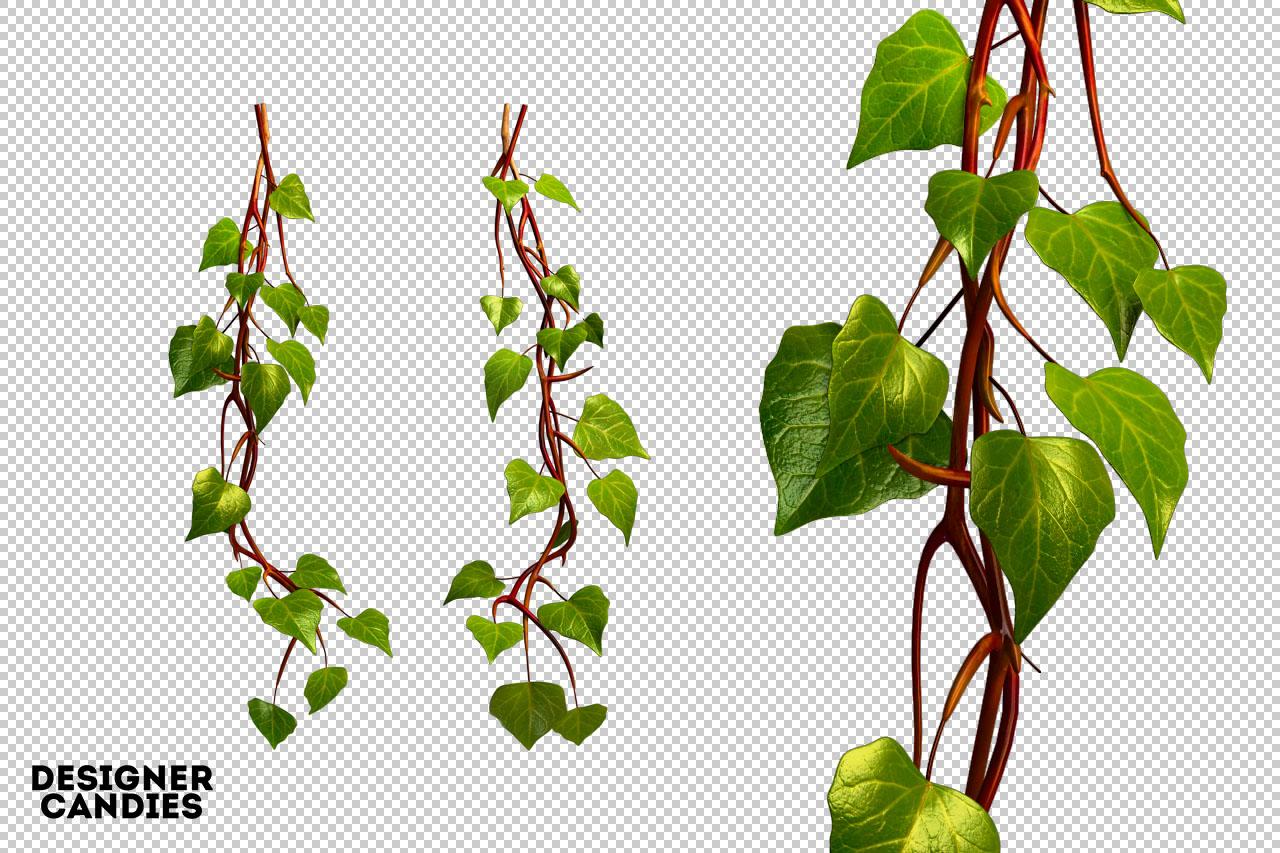 Ivy PNG Renders