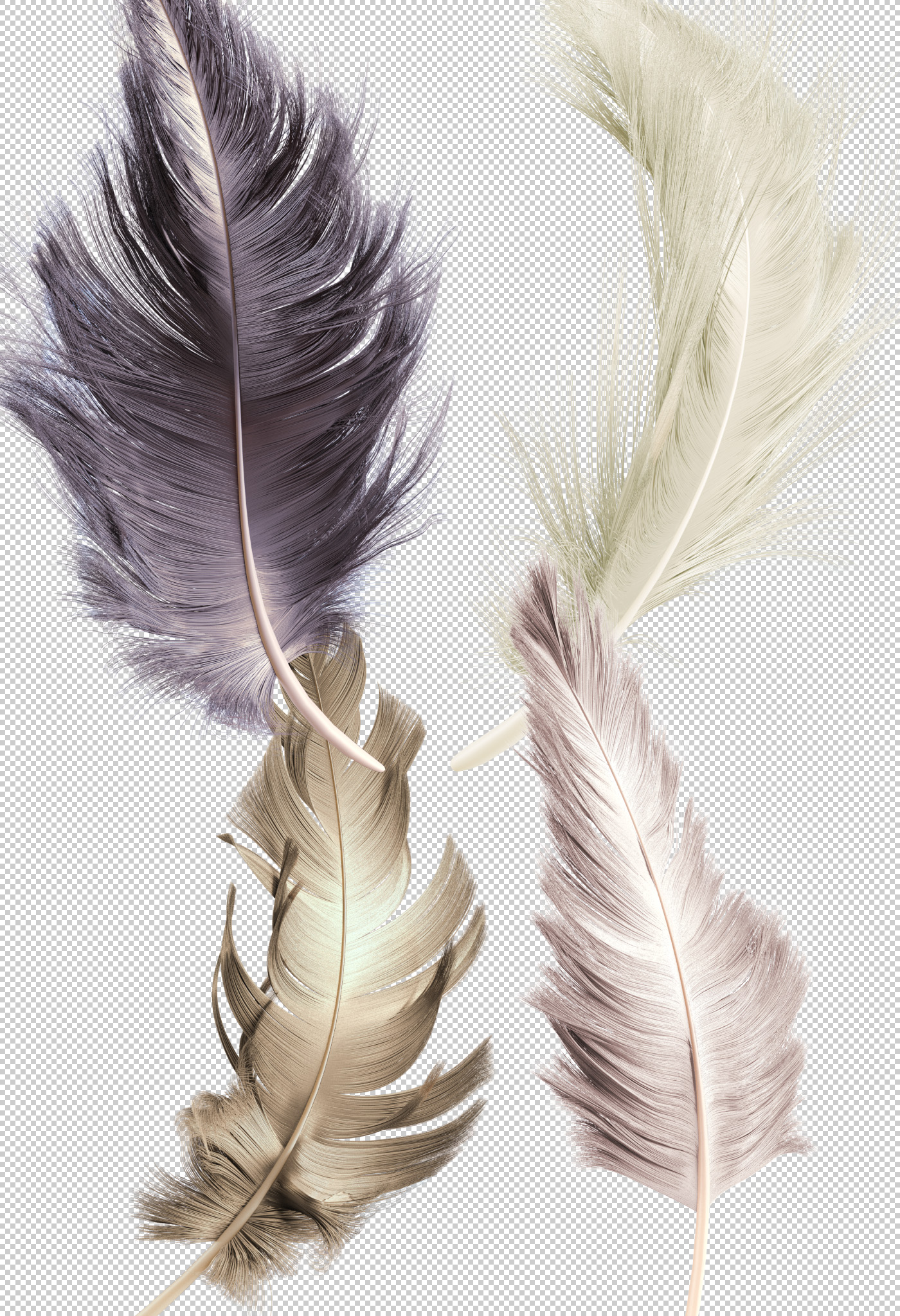 Transparent .png feather renders