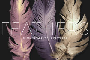 PNG Feather Renders Pack