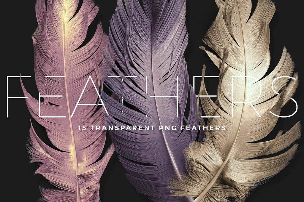 Transparent PNG feathers