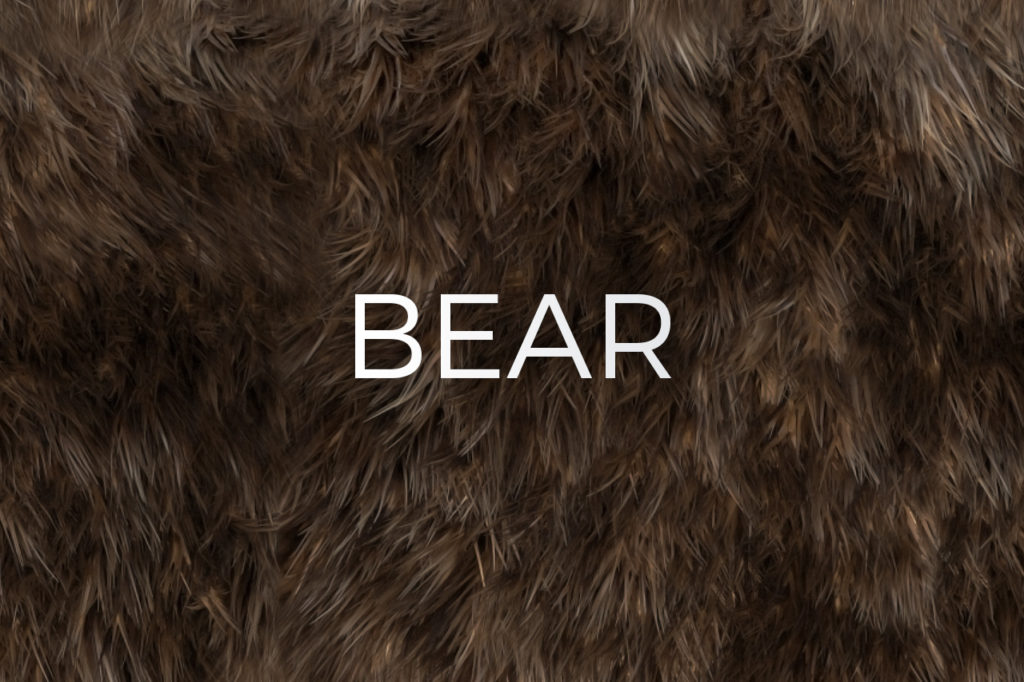 Bear Skin Fur Texture
