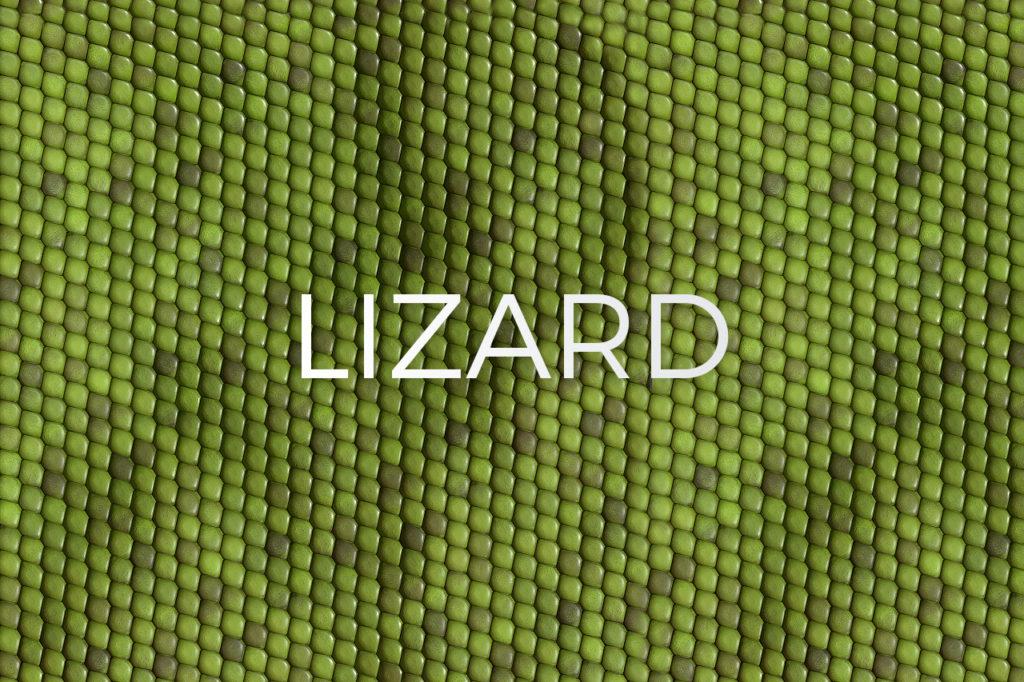 Lizard/Gecko Skin Pattern