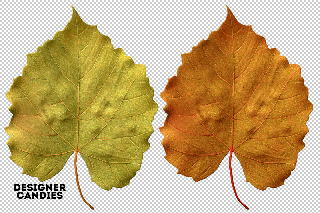 Autumn/Fall Leaf Preview