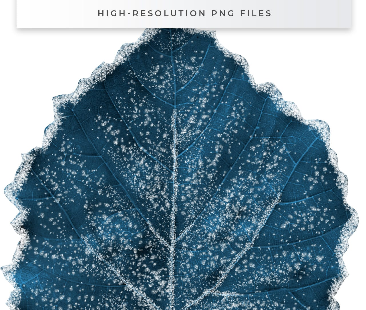 Icy Winter Leaves in PNG format