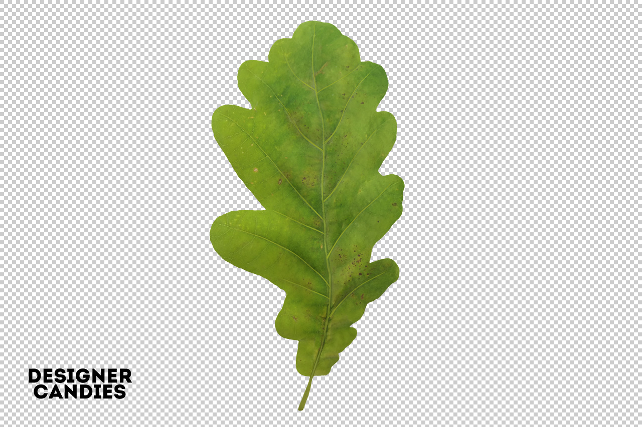 Isolated PNG Leaf