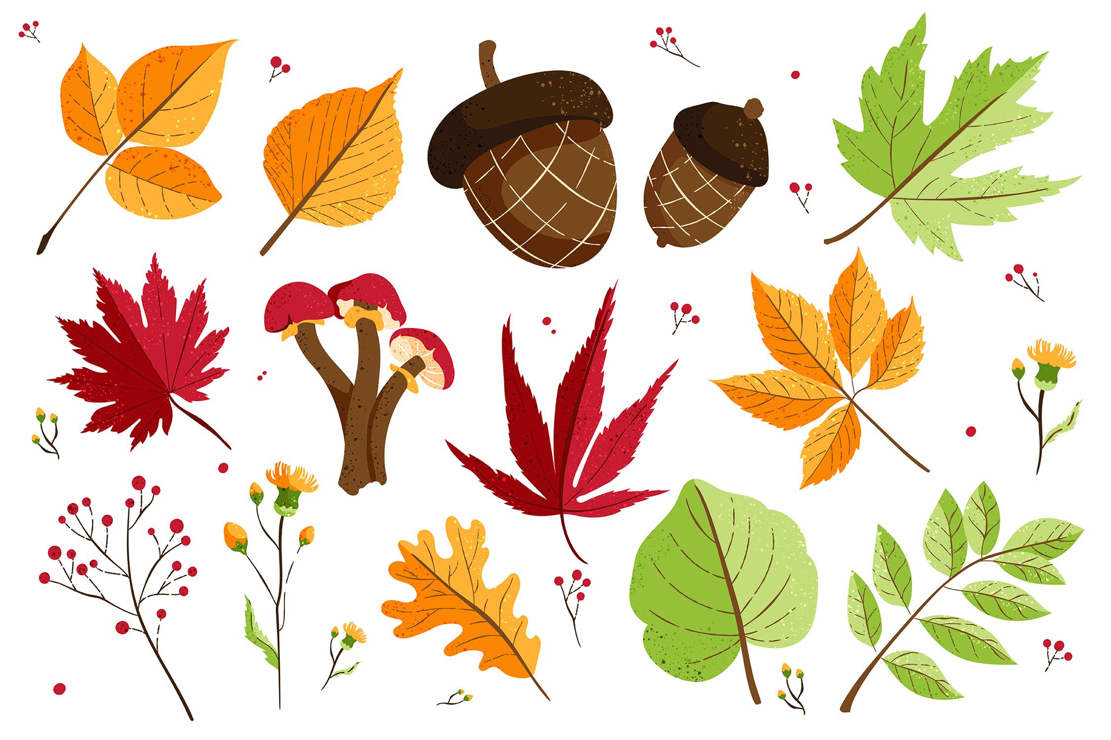 Autumn Fall Foliage Acorn Leaves Vector Clipart Illustrations